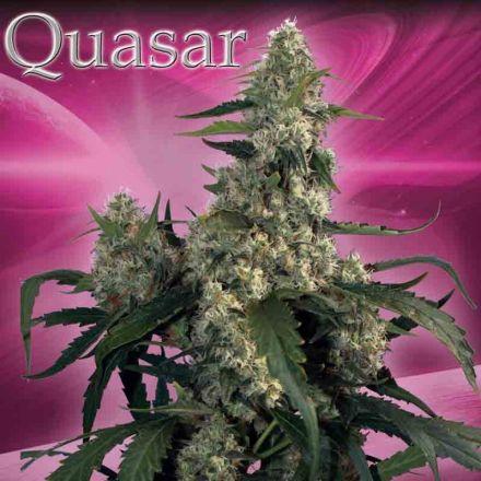 Quasar – 5 feminizovaných semen Budha Seeds