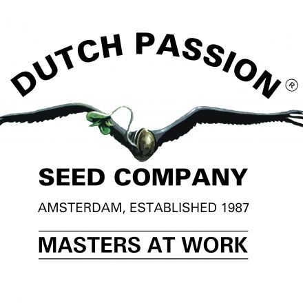 Mix 3 - feminizované semínka Dutch Passion ks