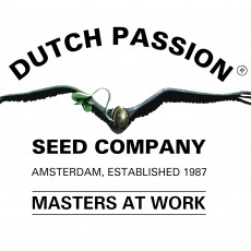 Mix 2 - feminizované semena Dutch Passion 6ks