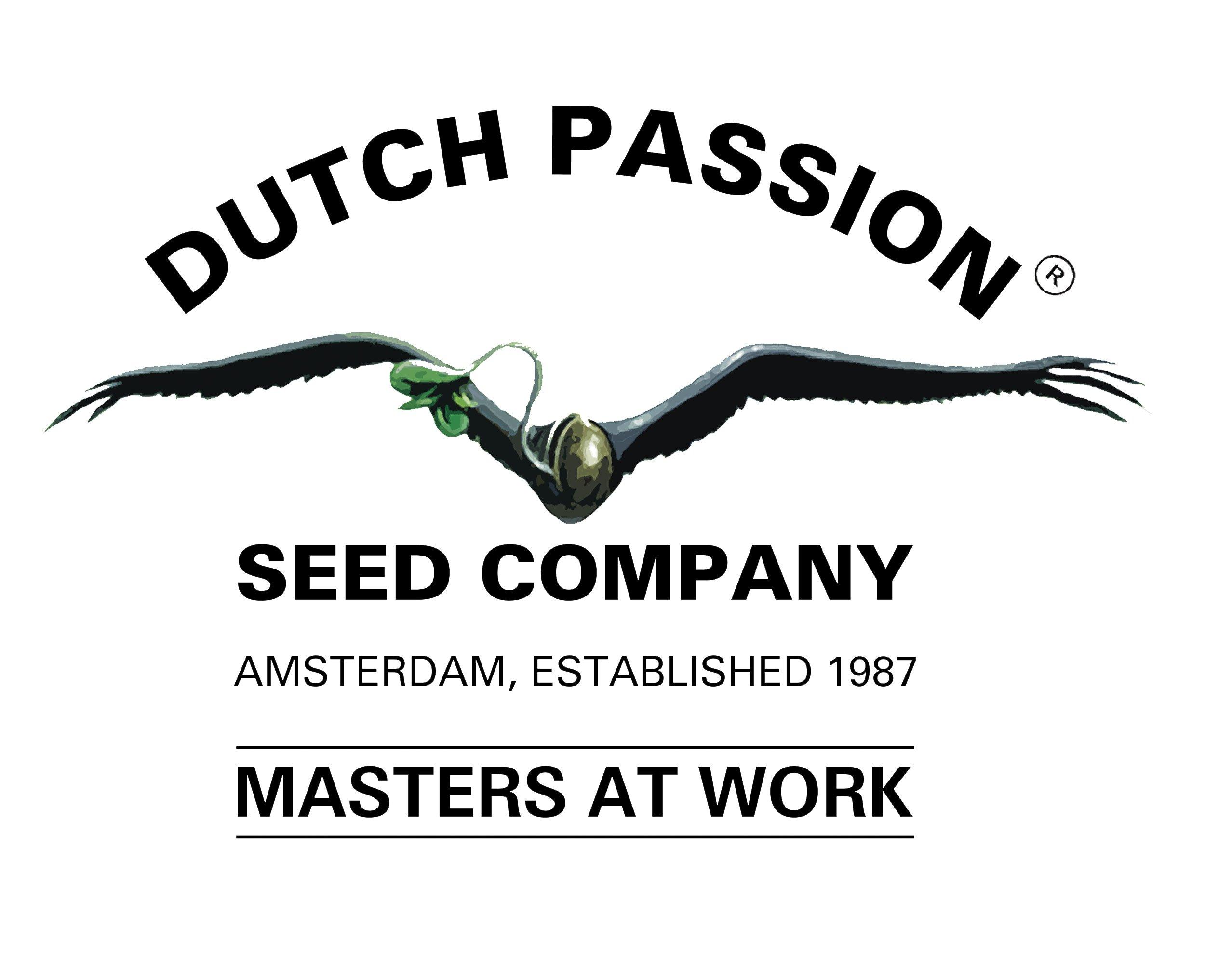 Dutch Passion Mix 2: HH, DP, VD – 6 feminizovaných semien