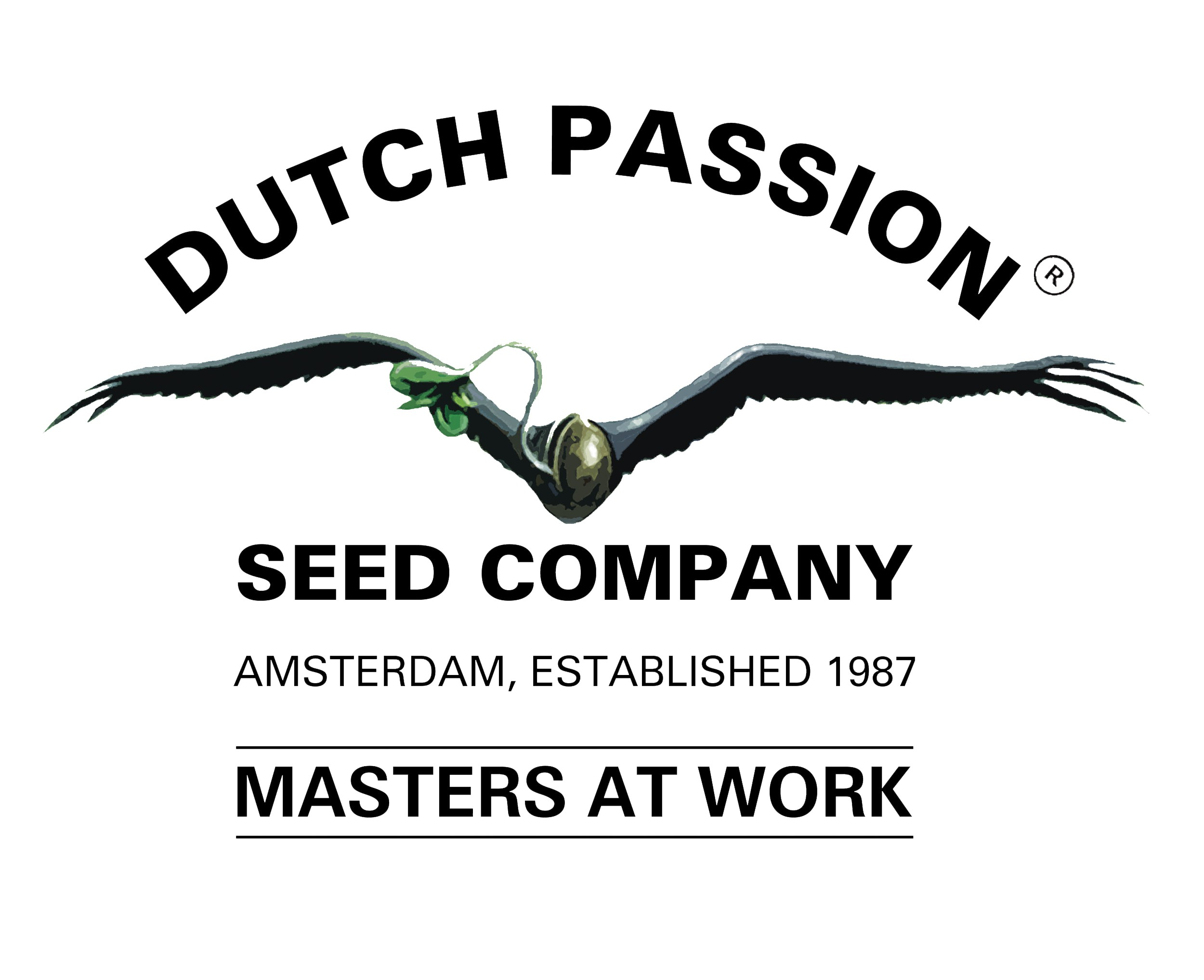 Mix semien 1 6ks (feminizované semená) Dutch Passion