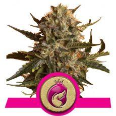 Royal Madre - feminizovaná semínka 5ks Royal Queen Seeds