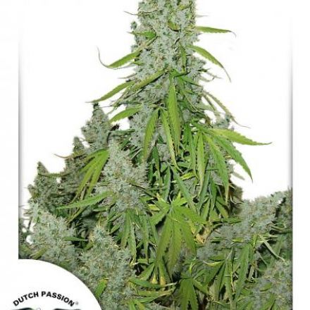 AutoUltimate®- autoflowering semienka 3ks Dutch Passion