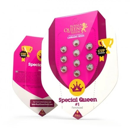 Special Queen n. 1 10 ks feminizované semena Royal Queen Seeds