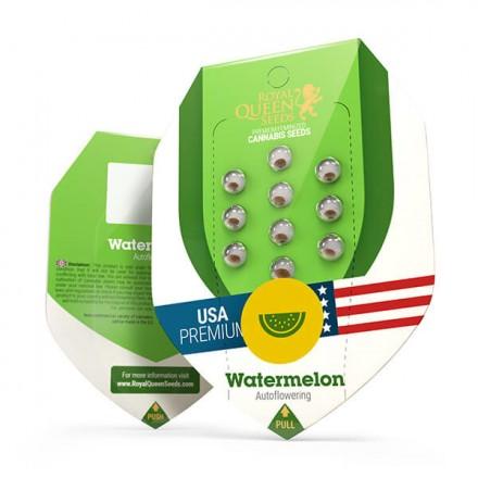 Watermelon Automatic - fem. a samonakvétací semínka 3ks Royal Queen Seeds