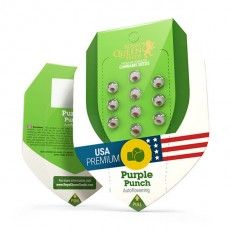 Purple Punch Automatic - fem. a samonakvétací semínka 3ks Royal Queen Seeds