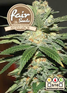 Auto Jack - autoflower semienka 10ks Fair Seeds