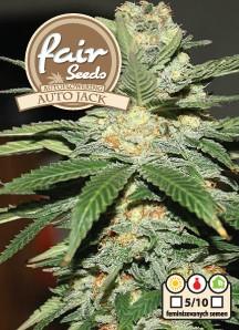 Auto Jack - autoflower semienka 10ks Fair Seeds
