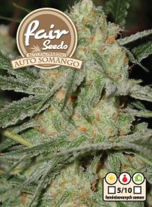 Auto Somango - 10ks autoflowering semienka Fair Seeds