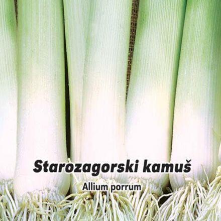 Pór pravý , letní - Starozagorsku kamuš 1,- semínka 5 g