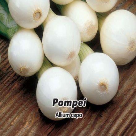 Cibule jarní lahůdková - Pompei 1,- semínka 5 g
