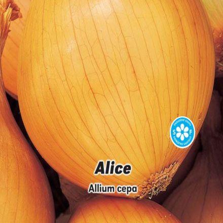 Cibule jarní žlutá - Alice - semínka 2 g