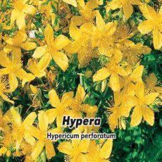 Ľubovník bodkovaný (rastlina: Hypericum perforatum) - Hypera - semená- 0,1 g