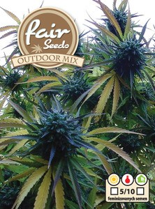 Outdoor MIX - 5ks autoflower semená konope Fair Seeds