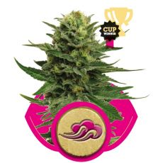 Blue Mystic - feminizovaná semínka 3 ks Royal Queen Seeds