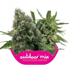 Outdoor Mix 10 ks feminizované semienka Royal Queen Seeds