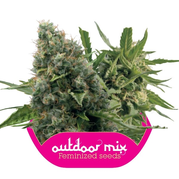 Outdoor Mix 10 ks feminizované semienka Royal Queen Seeds