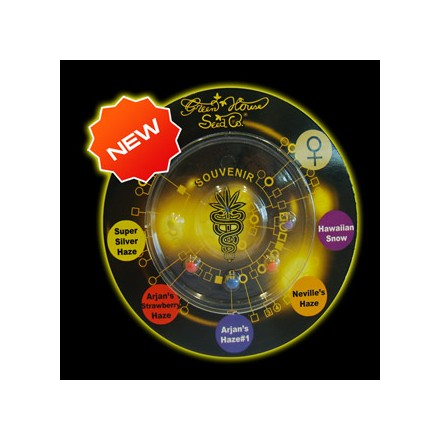 Sativa Mix - semínka 6 ks feminizovaná semínka (collection pack) Paradise Seeds