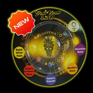 Sativa Mix 6 ks, feminizované semená (collection pack) Paradise Seeds