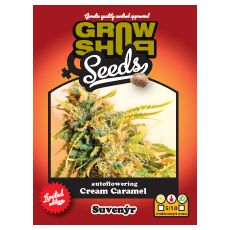 Cream Caramel 5 feminized autoflower semena Growshop seeds