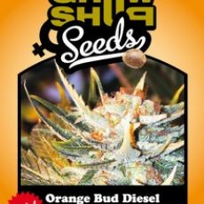 Orange Bud Diesel - 5 feminizované Growshop seeds