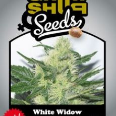White Widow 5 semena feminizované Growshop seeds
