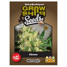 Cheese 10 feminizovaných semen Growshop seeds