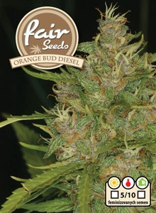 Orange Bud Diesel - 10 feminizovaných semen Fair Seeds