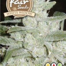 White Widow 10 feminizovaných semen Fair Seeds