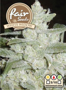 White Widow 10 feminizovaných semien Fair Seeds