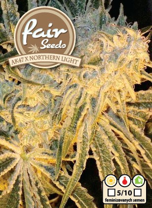 AK47 x Northern Light - 5 feminizovaných semínek Fair Seeds