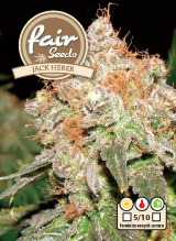 Jack Herer 5 feminizovaných semien Fair seeds