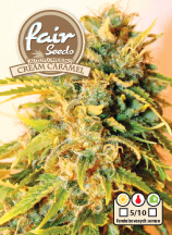 Cream caramel - 5 fem. a samonakvétacích semen Fair Seeds