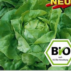 Hlávkový salát Ovation BIO osivo