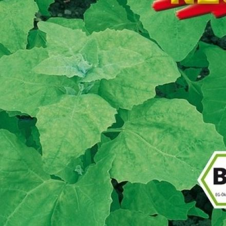 Melde – Lebeda Zahradní (rostlina: Atriplex hortensis) BIO osivo