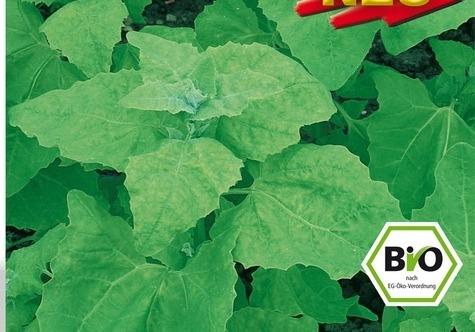 Melde - Lebeda Záhradné (rastlina: Atriplex hortensis) BIO