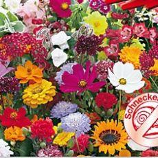 Kvetinová symfónia rezistentná šnekům