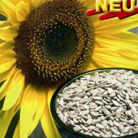 Slunečnice -Helianthus Snack