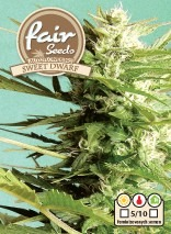 AutoSweet Dwarf – autoflowering semínka 5 ks Fair Seeds