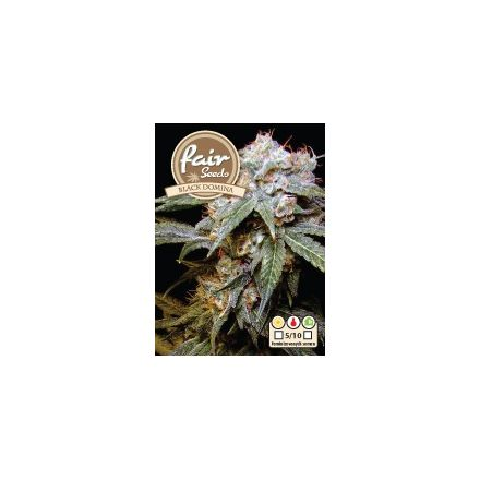 Black Domina – feminizovaná semínka 5 ks Fair Seeds