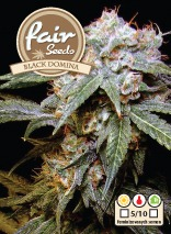Black Domina – feminizované semienka 5 ks Fair Seeds