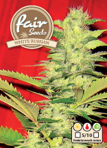 White Russian – feminizovaná semínka 5 ks Fair Seeds