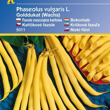 Keříčková fazole Golddukat (Wachs) – semena fazole