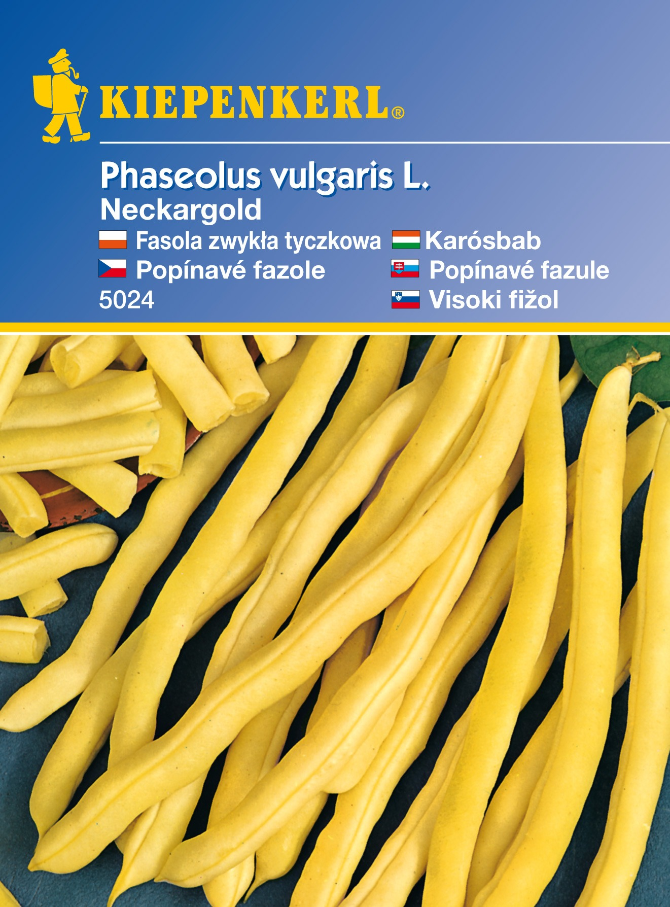 Popínavá fazole Neckargold – semena fazole