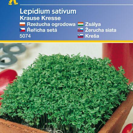 Řeřicha Krause – semena řeřichy