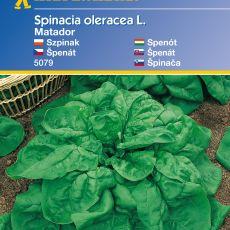 Špenát Matador KK – semena špenátu