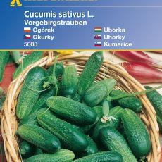 Nakládačky podhorské ježaté – semena nakládaček