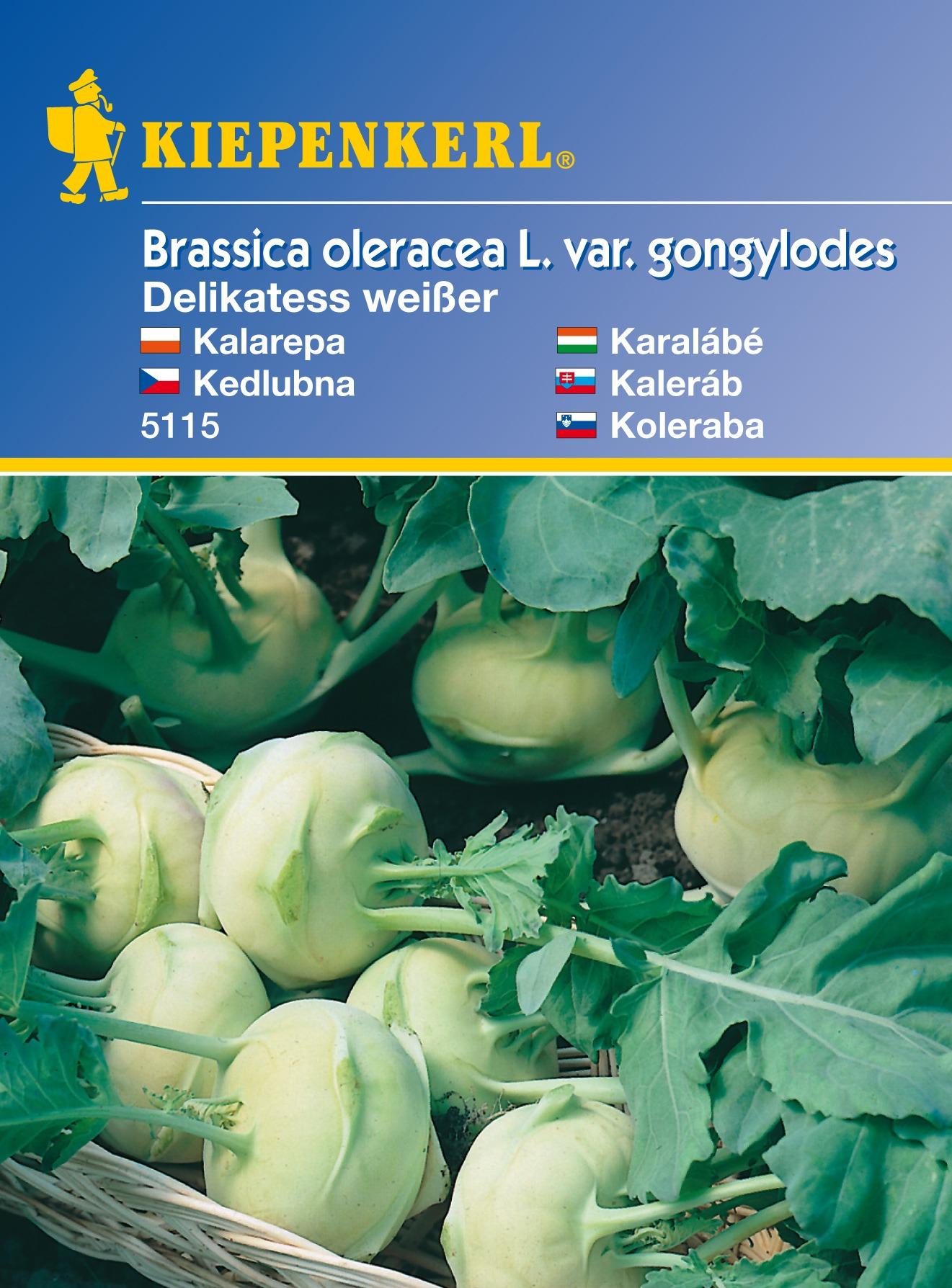 Brukev Delikateß bílá - semena brukve