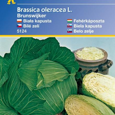 Bílé zelí Brunswijker - semena zelí