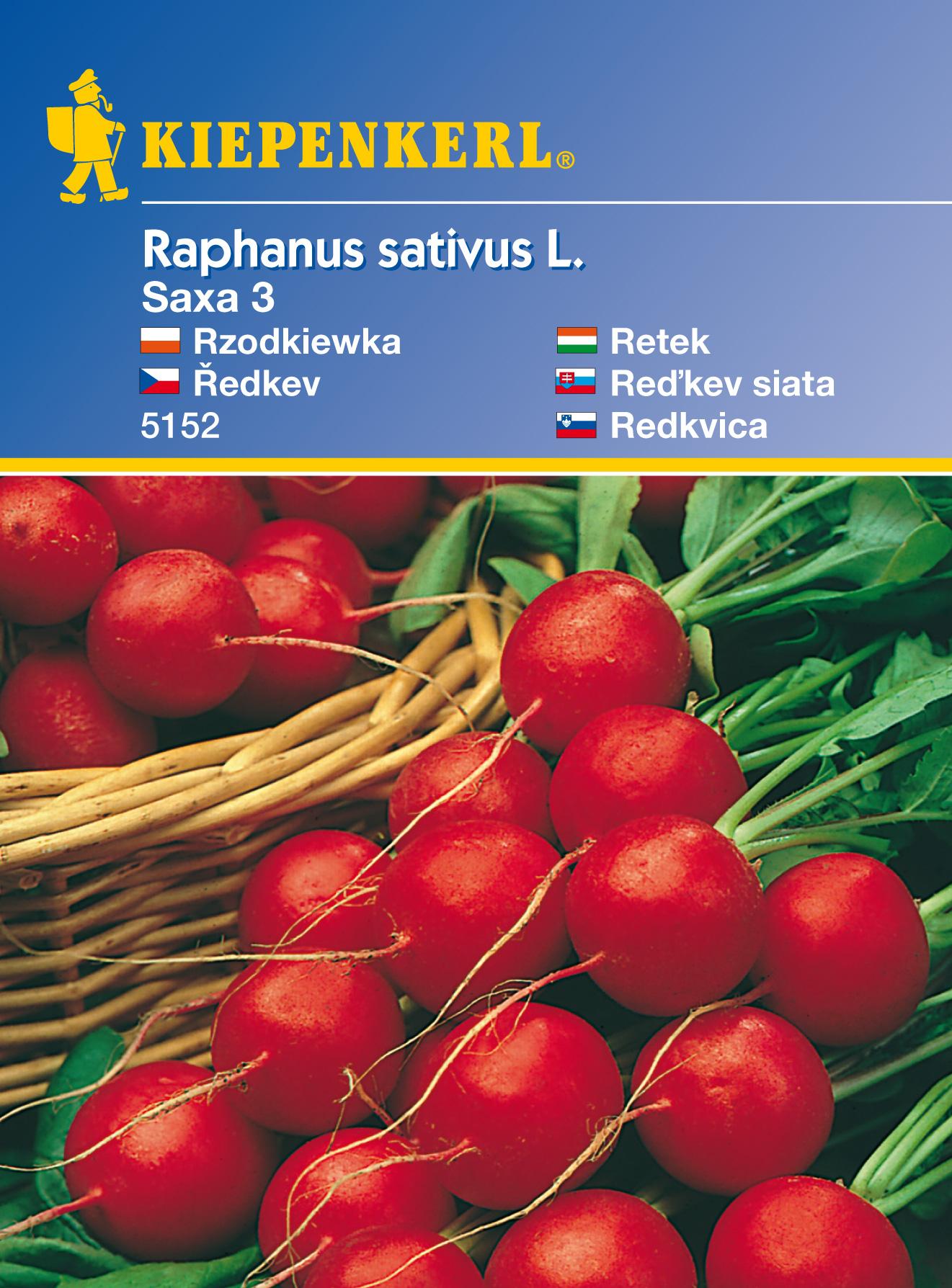 Ředkvička Saxa 3 - semena ředkviček